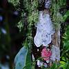 Description - Old Man's Beard Lichen, Baton Rouge Lichen and White Lichen <b>Title - Colorful Lichen</b> <i>- Fran Swirsky</i>