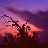 Description - Tree at Sunset <b>Title - Tree</b> <i>- Jeremy Raines</i>