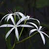 Description - String Lilies <b>Title - String Lilies</b> 1st Place <i>- Fran Swirsky</i>