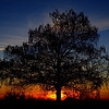 Description - Cypress Tree at Sunset <b>Title - Cypress Sunset</b> <i>- Dean Barrett</i>