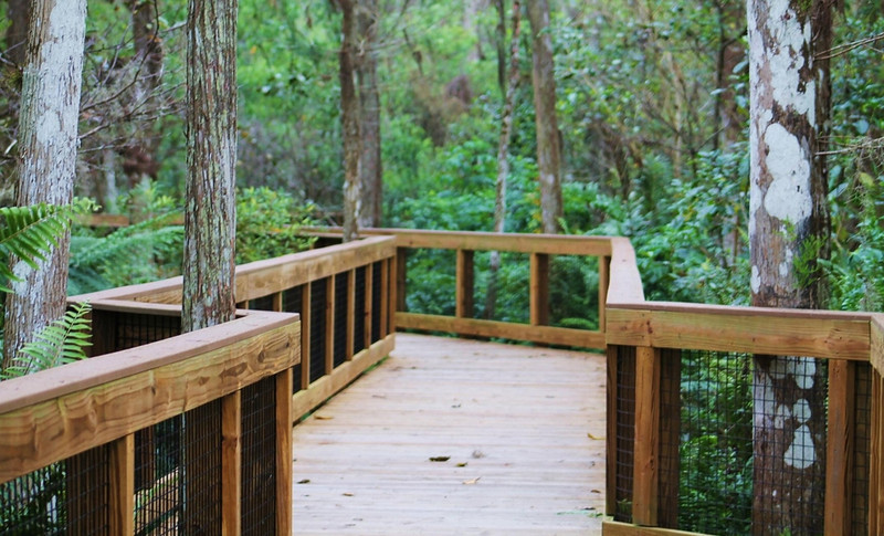 Description - Cypress Swamp Boardwalk <b>Title - Boardwalk to Paradise</b> 1st Place <i>- Wendy Casperson</i>