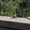 Description - Southeastern Lubber Grasshopper <b>Title - Grasshopper</b> <i>- Dion Sellitti</i>