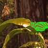 Description - Butterfly <b>Title - Butterfly</b> <i>- John Sutor</i>