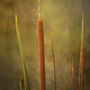 <b>Title - Cattail</b> Honorable Mention <i>- Kit Snider</i>
