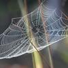 <b>Title - Spider Web</b> <i>- Lyle Gabor</i>