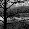 <b>Title - Winter Cypress</b> <i>- Phoenix Marks</i>