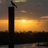Description - Boat-tailed Grackle <b>Title - Bird on Pole at Sunset</b> <i>- Joan Funk</i>