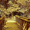 Description - Cypress Swamp Boardwalk <b>Title - Evening Glow</b> <i>- Leslie Goodman</i>