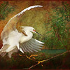 Description - Snowy Egret <b>Title - Glo-wing Egret</b> 1st Place <i>- Meg Puente</i>
