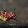<b>Title - Baby Lubber Grasshopper with Egg Still Attached</b> Honorable Mention <i>- Meg Puente</i>