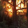 Description - Cypress Tree and Spanish Moss at Sunset <b>Title - Lox Afire</b> Honorable Mention <i>- John Block</i>