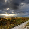 Description - Sunset over the Marsh <b>Title - The Path to Enlightenment</b> <i>- Ashley Machulak</i>