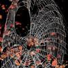 Description - Spider Web <b>Title - Spider Web</b> <i>- Arthur Jacoby</i>