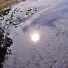 Description - Marsh Reflections <b>Title - Reflection</b> <i>- Bridget Lyons</i>