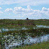 Description - View of C-8 Impoundment <b>Title - Clouds and Marshes</b> <i>- Barry Mintzer</i>