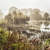 Description - Morning Fog Over Marsh <b>Title - Foggy Morning</b> <i>- Arthur Jacoby</i>