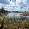 Description - View of C-8 Impoundment <b>Title - Beautiful View</b> <i>- Barry Mintzer</i>