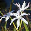 Description - String Lilies <b>Title - A Glorious Day</b> 3rd Place <i>- Noah Kersten</i>