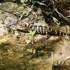 Description - Baby Alligator <b>Title - Just Chillin'</b> <i>- Dion Sellitti</i>