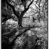 Description - Butterfly Garden <b>Title - Through the Shadows</b> Honorable Mention <i>- Debbie Rubin</i>