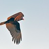 <b>Title - Turkey Vulture</b> <i>- Harvey Mendelson</i>