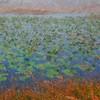<b>Title - Impressionist Spatterdock</b> Best In Show <i>- Ed Mattis</i>