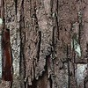 <b>Title - Texture - Bark</b> <i>- Harvey Mendelson</i>