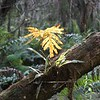 Description - Tiny Swamp Fern and Golden Polypody Fern <b>Title - Ferns on Trunk</b> <i>- Cathy Patterson</i>