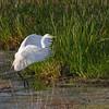 <b>Title - Great Egret Take Off</b> <i>- Arwen Paredes</i>