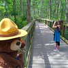 Smokey Teaching Fire Prevention in a Cypress Forest