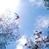 A Heavenly Bird