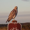 Hawk Eyes on Violators