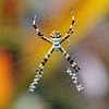 Spider in Cypress Swamp