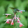 Sweet Flowers and Dragonflies