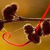 Vine Wrap