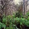 Secrets of the Cypress Swamp