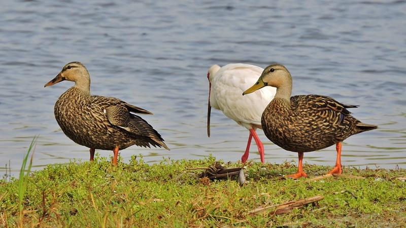 Birdbath Trio