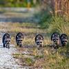 Raccoon Platoon