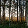 Cypress Galley