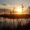Sunrise Over the Marsh Trail