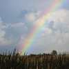 Rainbow Over the Marsh