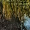 Reflected Grass