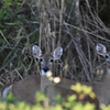 Deer By the Levee