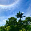 360 Degree Halo View
