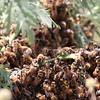 Western Honey Bees