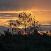 Sunrise on the Marsh Trail