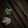 Two Lone Leaves
