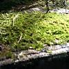 The Living Moss