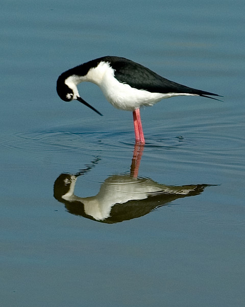 I won 1st place photo August Quarterly contest at the Camera Club of Brevard for the reflection theme.