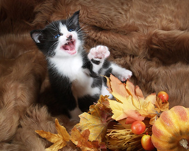 contest photos - we love cats